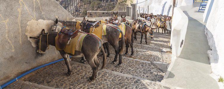 Los burros colocados para cargar a personas