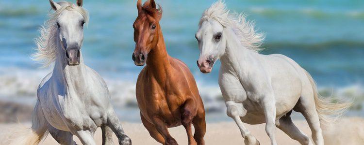 El animal pasará a convertirse en compañero y amigo