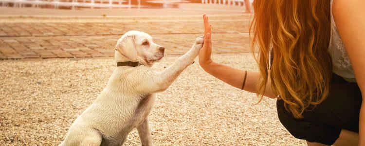 Hay que prestar atención y dedicar tiempo a nuestro perro
