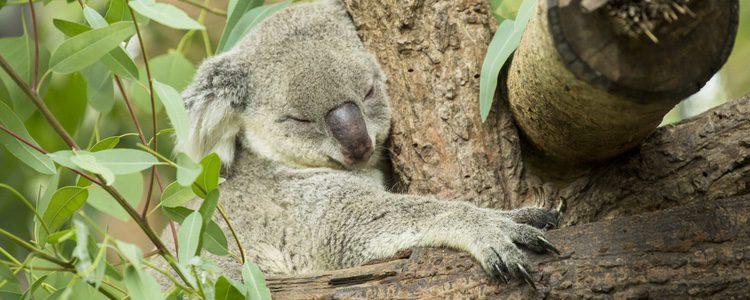 Cada animal tiene unas características del sueño