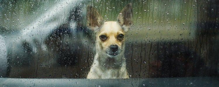 Disfruta de tu perro en casa los días de lluvia