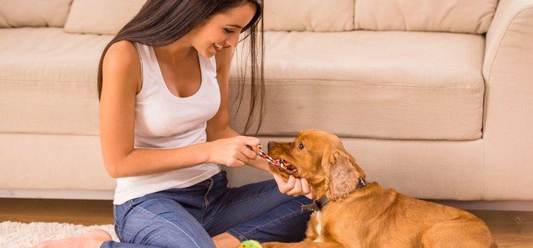 Un juego sencillo puede ser divertido para ti y para tu perro