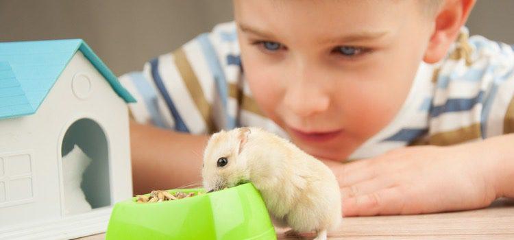 Los hámsters son habituales en hogares con niños