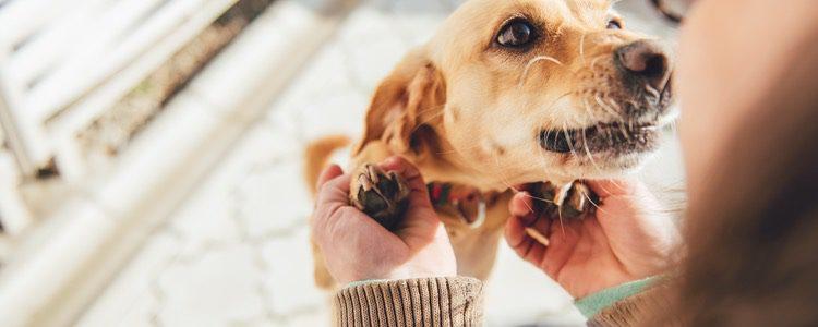 Los perros ladran o gimen para saludar a su dueño