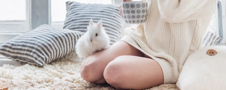 Si tu conejo te rasca con su barbilla significa que te está marcando como su territorio