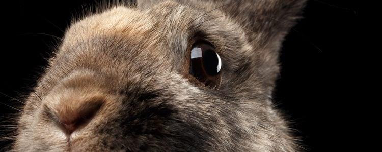 Los conejos intentan llamar la atención de las personas moviendo su hocico