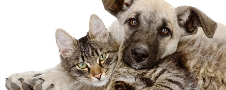 Si consigues introducir bien al nuevo animal es probable que ambos consigan llevarse bien