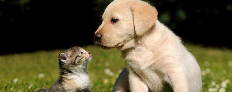 Es mejor preparar el terreno para avisar al animal que vive en la casa que va a tener un nuevo compañero