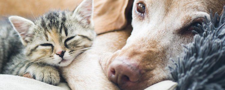 Tienes que asegurarte que tu perro y tu gato cumplen los límites establecidos