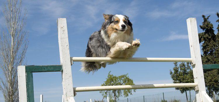 Todo el mundo no puede tener un perro de asistencia