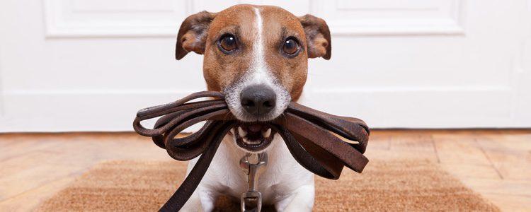 Que nos acostumbremos al olor de nuestro perro no significa que este sea una buena señal