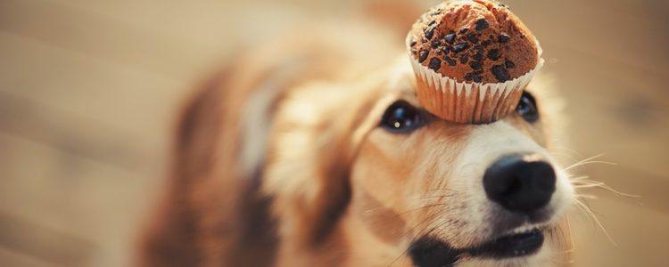 La mala alimentación es uno de los principales motivos del mal olor de los perros