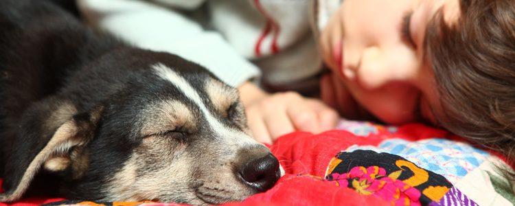 Despedirse de un perro con el que hemos compartido tantas cosas puede ser muy duro