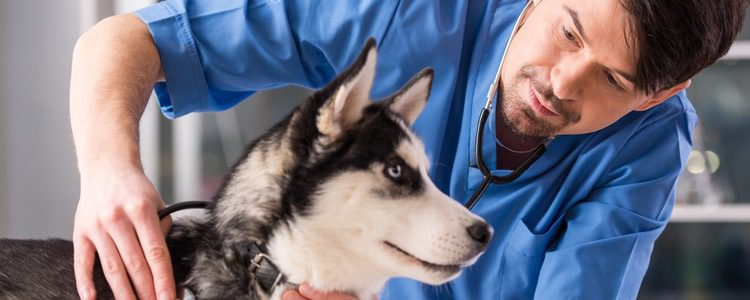 Si el diagnóstico es complicado acude a un veterinario