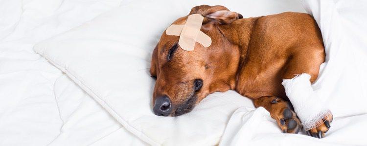 Tu mascota se merece los mejores cuidados