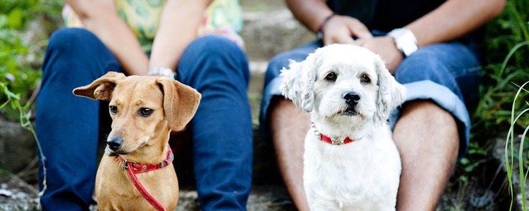 Los dueños socializan con otros dueños para hablar de sus mascotas
