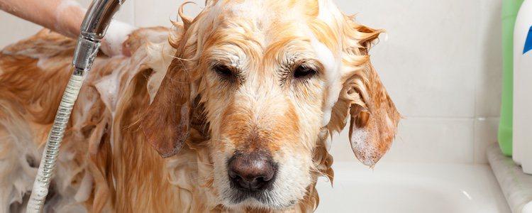 Tenemos que atender las necesidades de nuestro perro