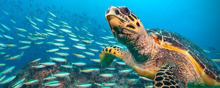 Las tortugas de agua son más tranquilas que las de tierra