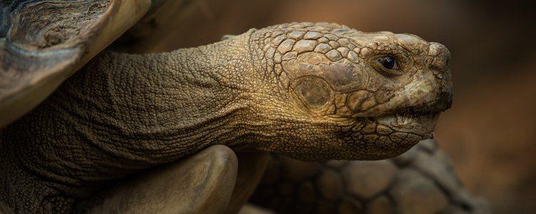 Es muy importante vigilar la alimentación de las tortugas