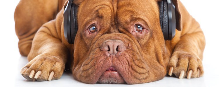 Al igual que los humanos, los perros también tienen su estilo musical preferido