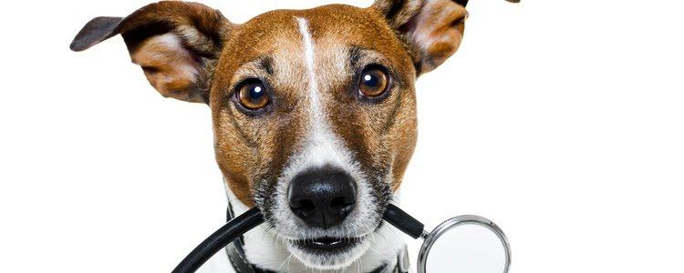 El mal aliento en tu mascota puede estar debido a serios problemas bucales o enfermedades orales como la gingivitis
