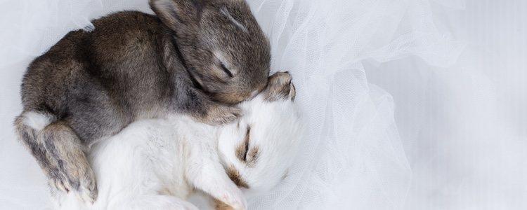 Los conejos suelen dormir entre 6 y 8 horas al día, aunque pueden llegar a las 10