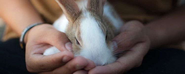 No es recomendable que metas a tu conejo a dormir en la misma habitación que tú