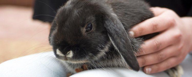Los conejos no tienen horarios fijos para dormir