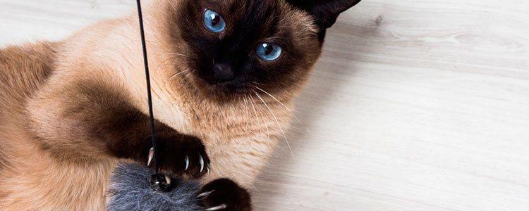 Juega más con tu gato y diviértelo con juguetes que le animen a correr como pelotas o láseres