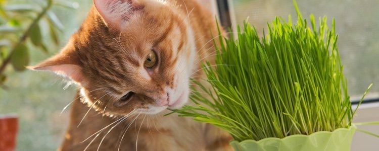 Los gatos pueden ingerir alguna planta venenosa