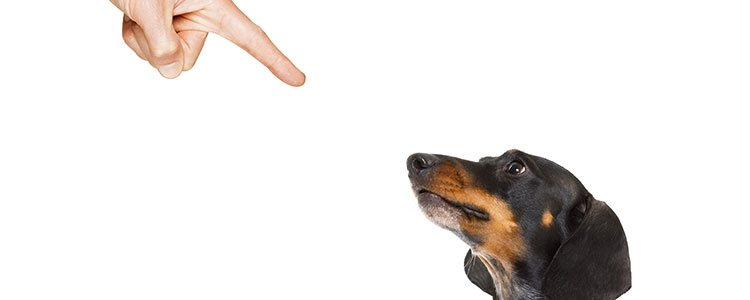 Es fundamental recordar al perro quién es el líder y castigarlo cuando sea necesario