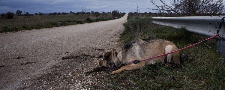 Encontrar perros en las cunetas no es algo eventual y hay que tratar de luchar porque no ocurra
