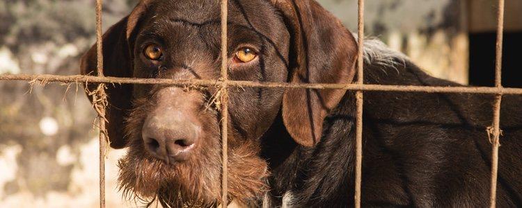Muchas personas dejan a los perros en perreras, pero estas no dan más de sí