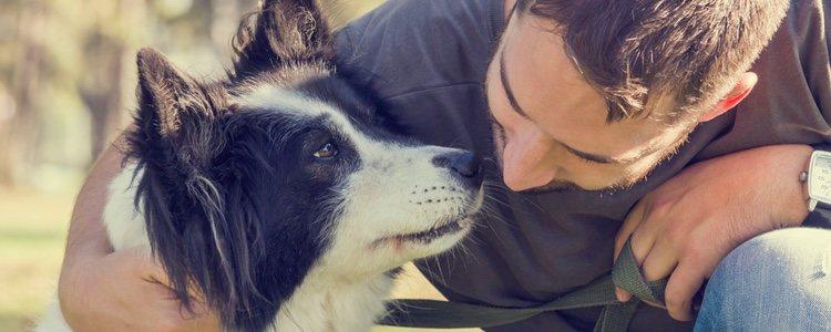 Es importante que un perro sepa comportarse ante ciertas situaciones, como puede ser la presencia de un desconocido
