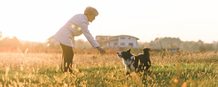 Una buena educación mejorará en vínculo entre tu mascota y tú