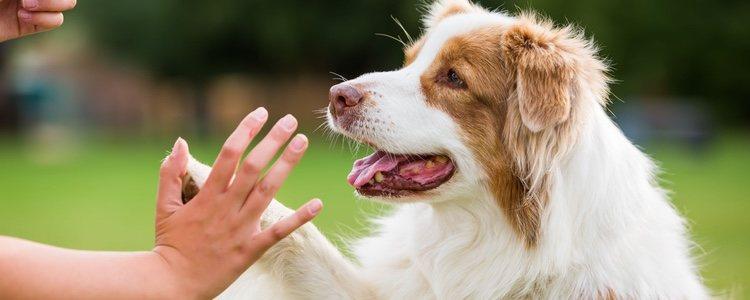 Estar bien educado ayudará a tu perro a que su vida sea mejor