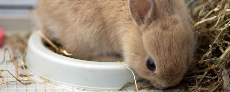 Es muy habitual que los conejos se suban y jueguen con el comedero