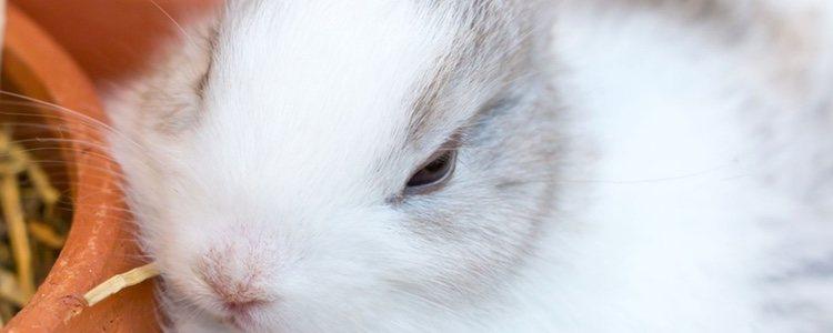 Hay diferentes manera de conseguir que los conejos no tiren el comedero