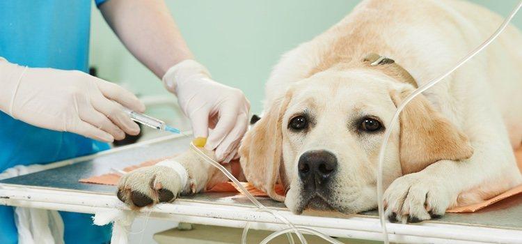 El seguro puede hacerse cargo de los gastos de una intervención de tu mascota