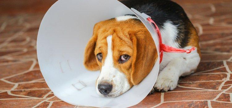 Ante cualquier problema, es importante que nuestra mascota tenga la mejor asistencia