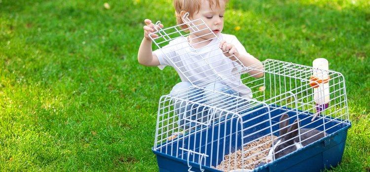 Es fundamental que la jaula esté limpia para que tu conejo esté cómodo