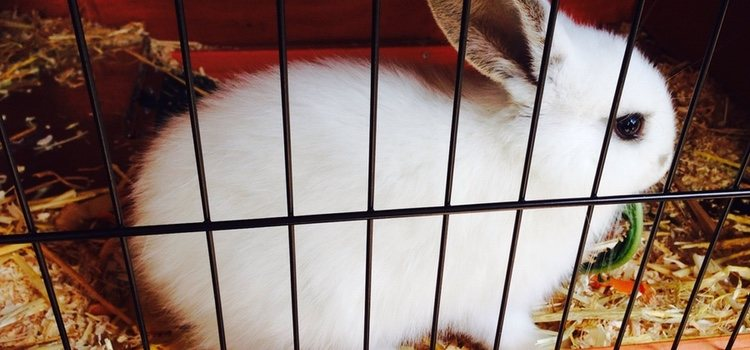 Los conejos tienden a hacer sus necesidades en un rincón