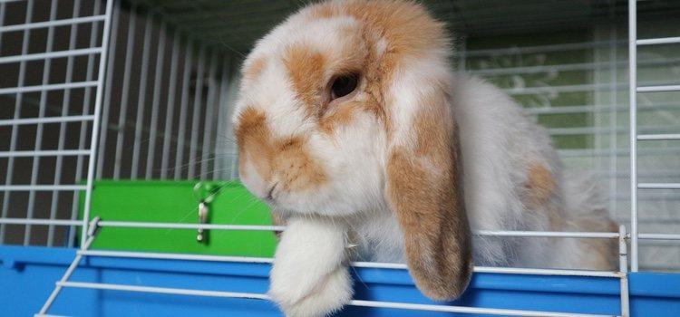 La paja debe estar seca para que el conejo esté cómodo y aseado