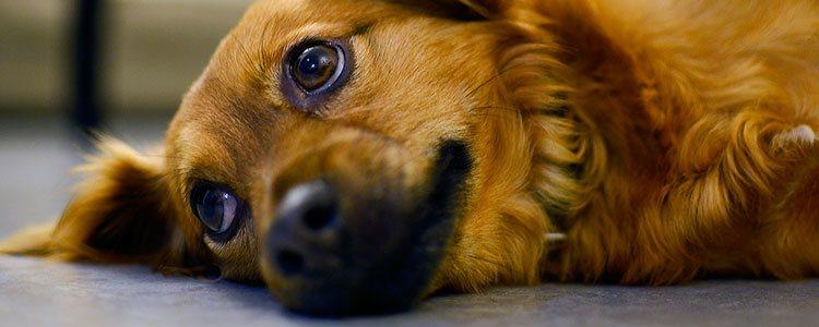 La llegada del invierno puede hacer que tu mascota se muestre más cansada o inactiva de lo normal