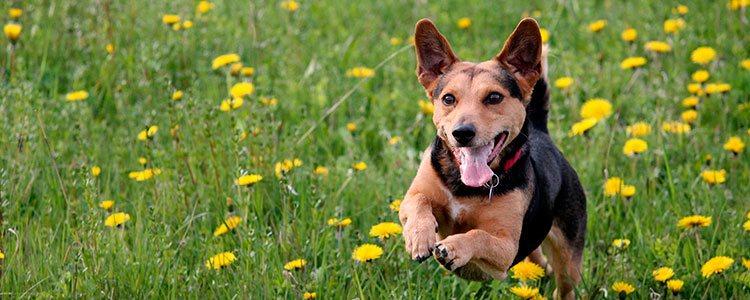 Con un poco de apoyo tu mascota podrá enfrentar todos estos cambios y volver a ser la misma de siempre