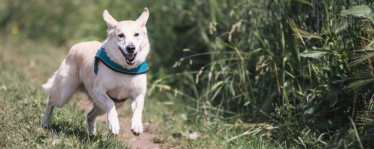 Tu mascota debe conocer normas básicas de convivencia y es mejor habituarles a ciertas horas de paseo y comida