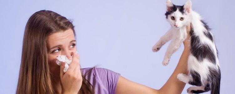 Al igual que los humanos pueden ser alérgicos a los gatos, estos también pueden serlo a los humanos