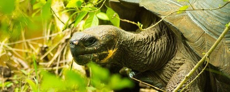 Los rayos del sol favorecen la conservación del caparazón de tu tortuga