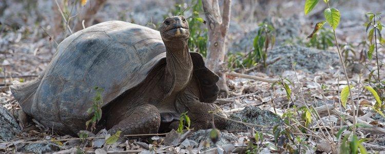 Debes adecuar el espacio de tu vivienda para crear un hábitat agradable para tu tortuga