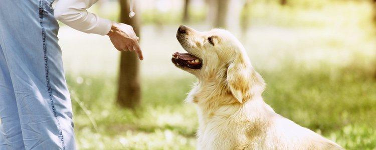 El educador enseña al perro a tener un buen comportamiento